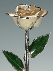 Pearl White Rose Platinum